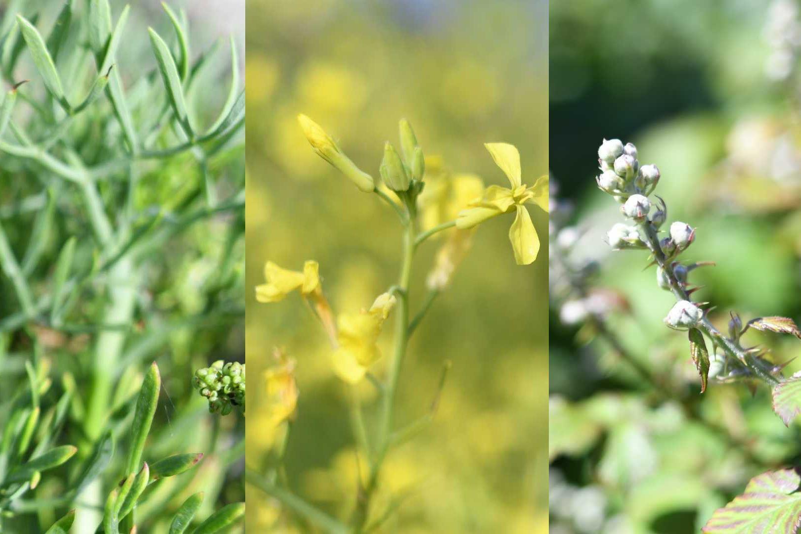 balade-plantes-comestibles_1