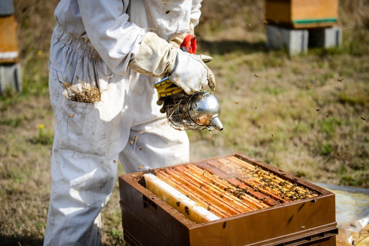 Fumage de ruche