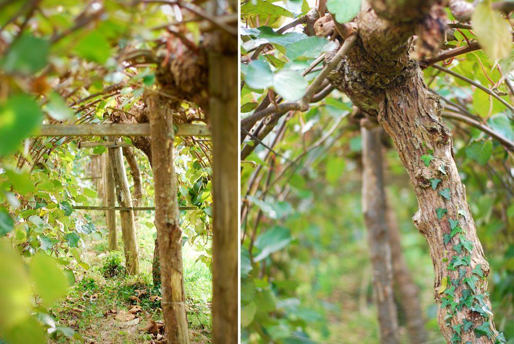 arbres-montage