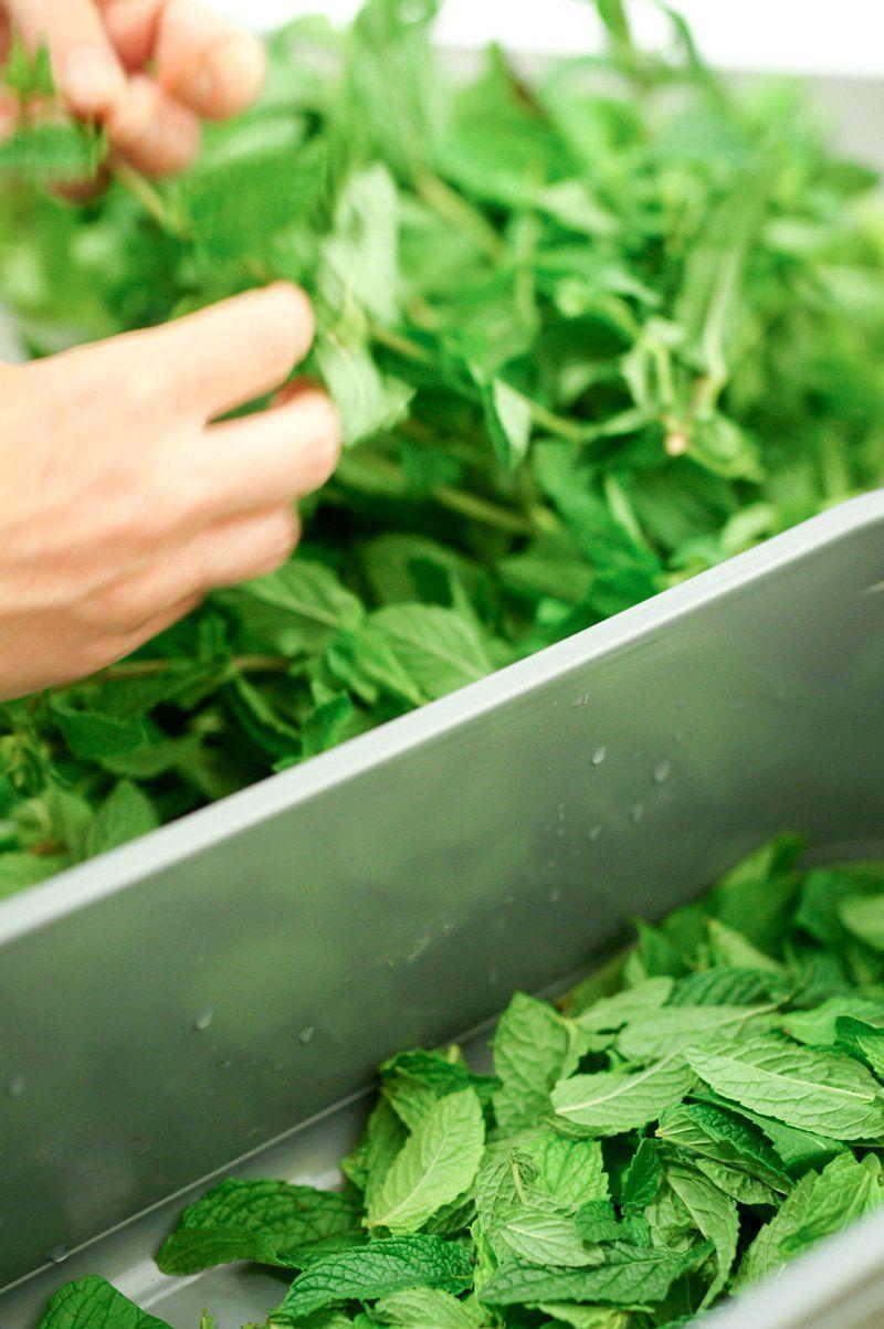 feuilles de menthe fraiche pour le mojito