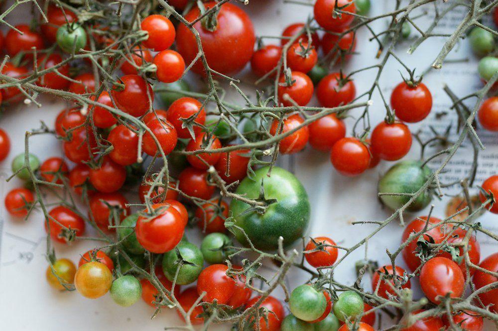 Les tomates vertes en cuisine tout savoir sur les for Jardin orgeres