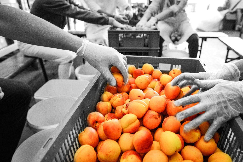 La Cour d'Orgères : Dénoyautage des abricots