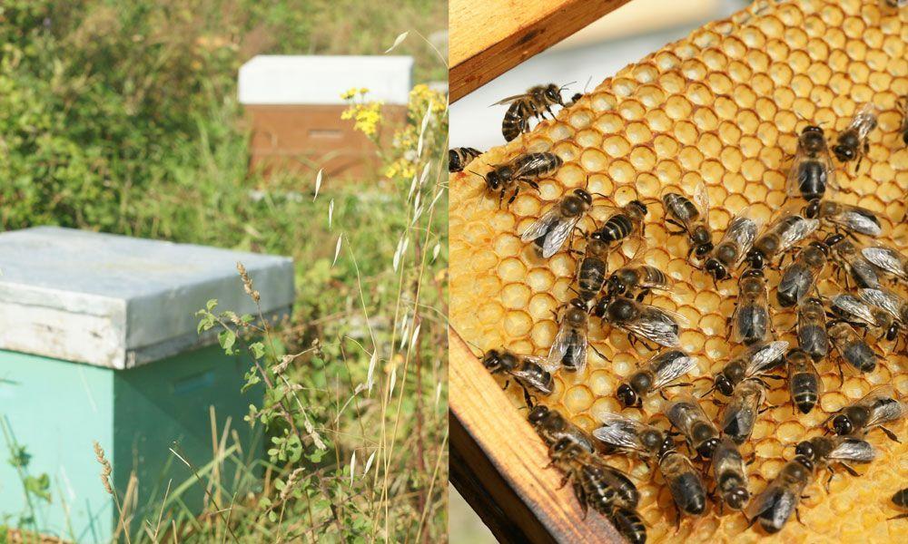 miel-quiberon-cadre-abeilles2