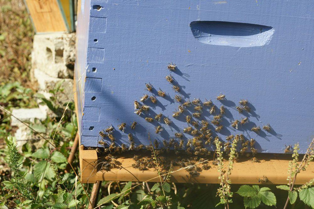 ruche-abeilles