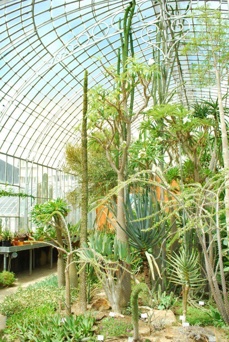 serre-jardin-des-plantes