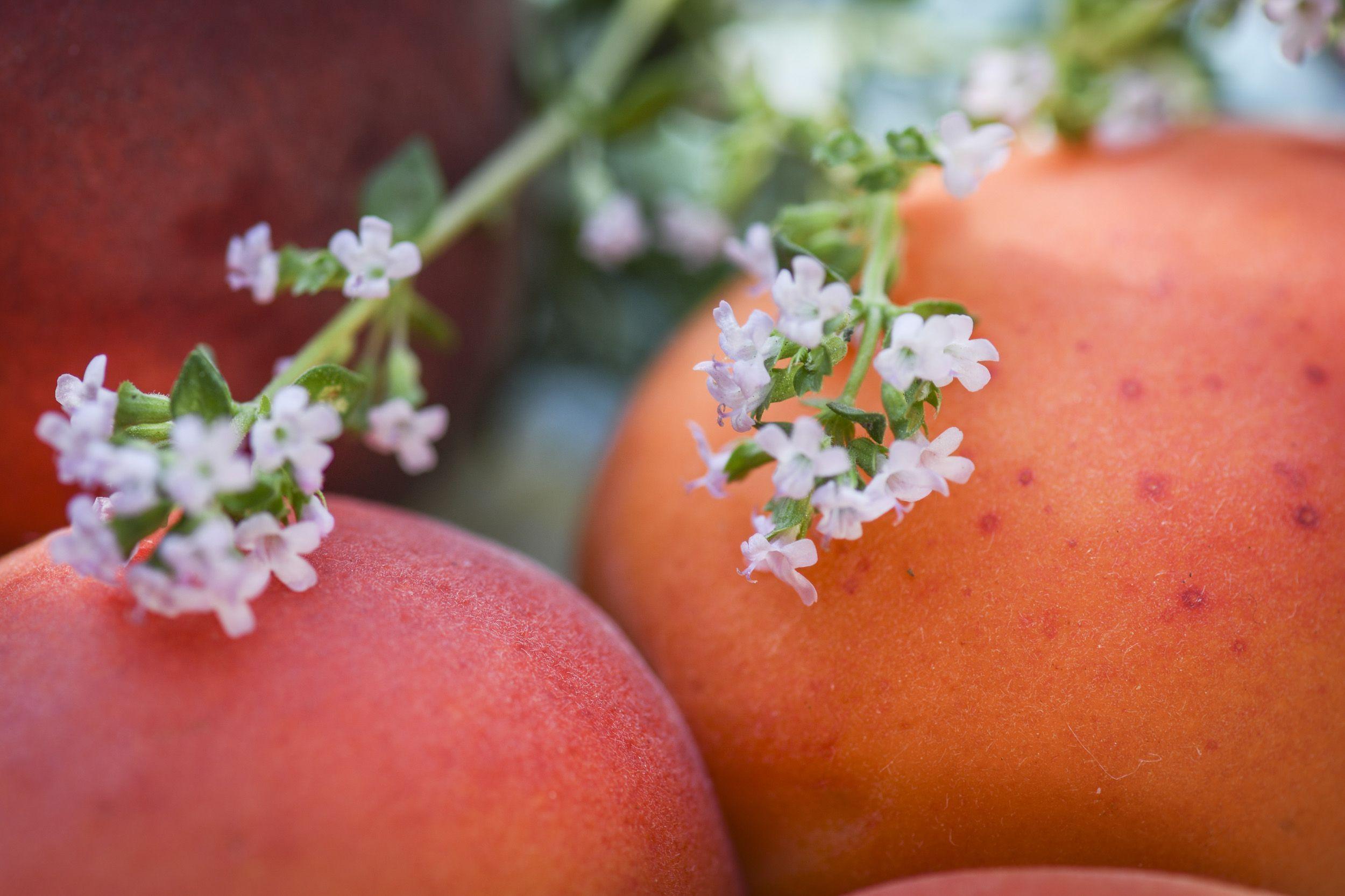 thym-abricot