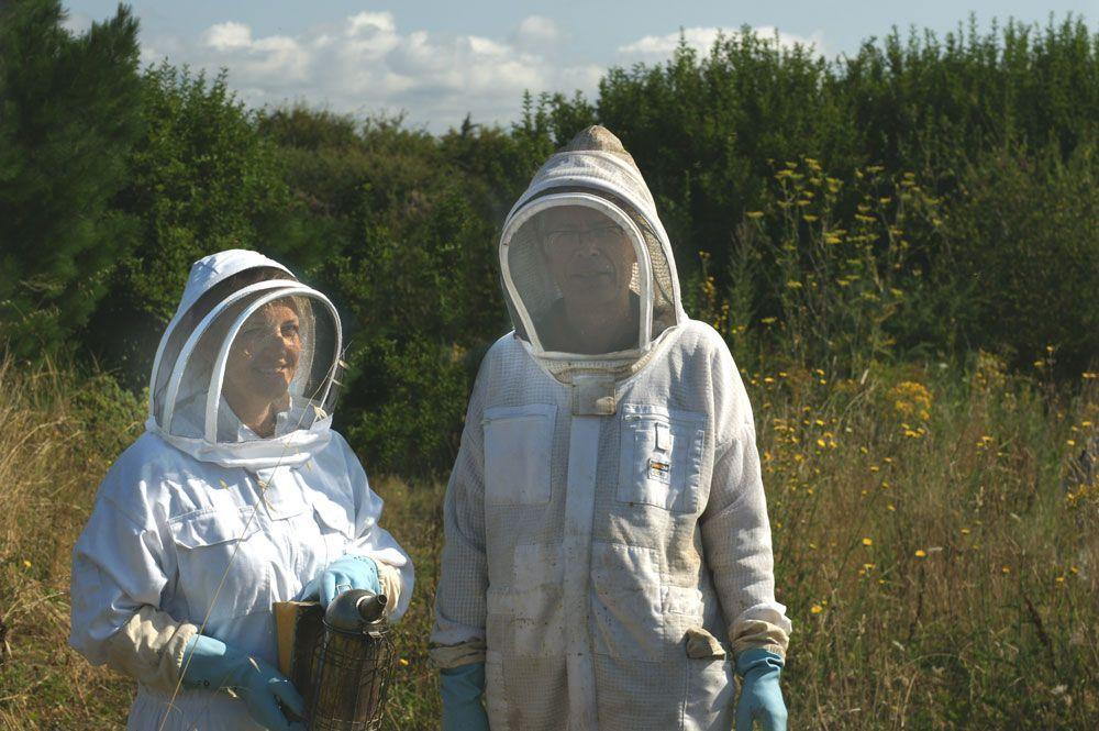 visite-ruche-miel-quiberon